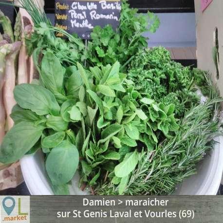Herbes aromatiques (en bouquet)