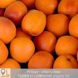 Abricots du Rhône (LES 100 GR)